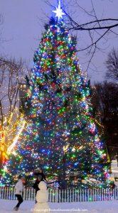 bostonxmastree